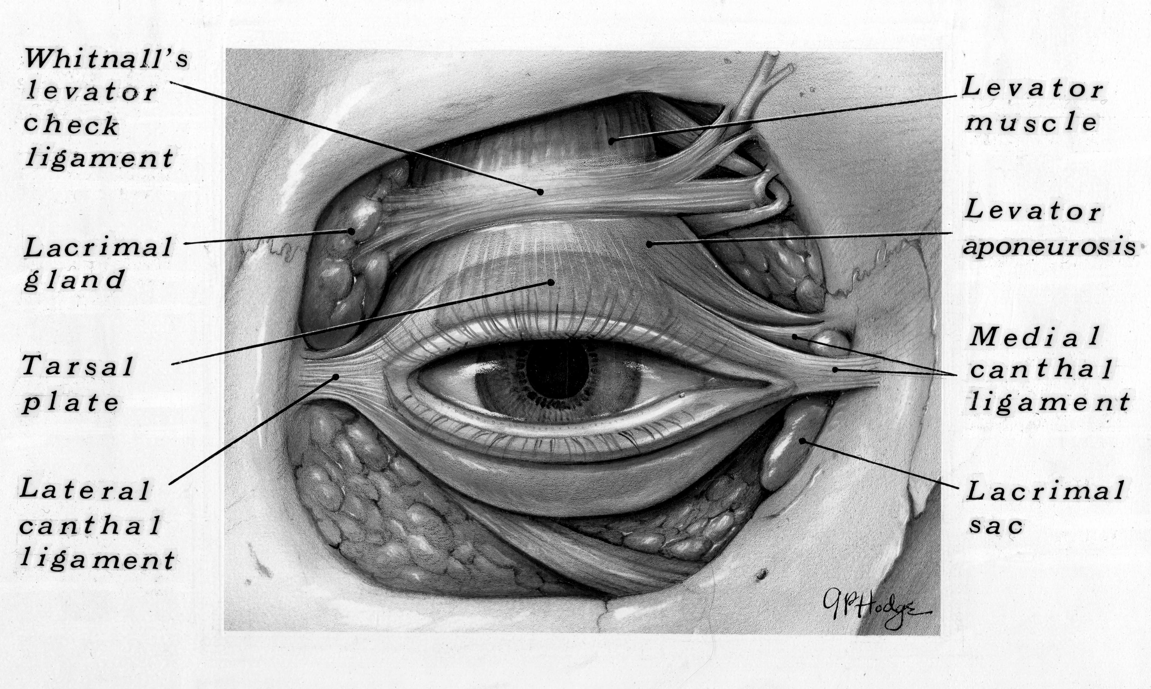 Bentley Image Bank Bentley Historical Library Anatomy Of The Eye
