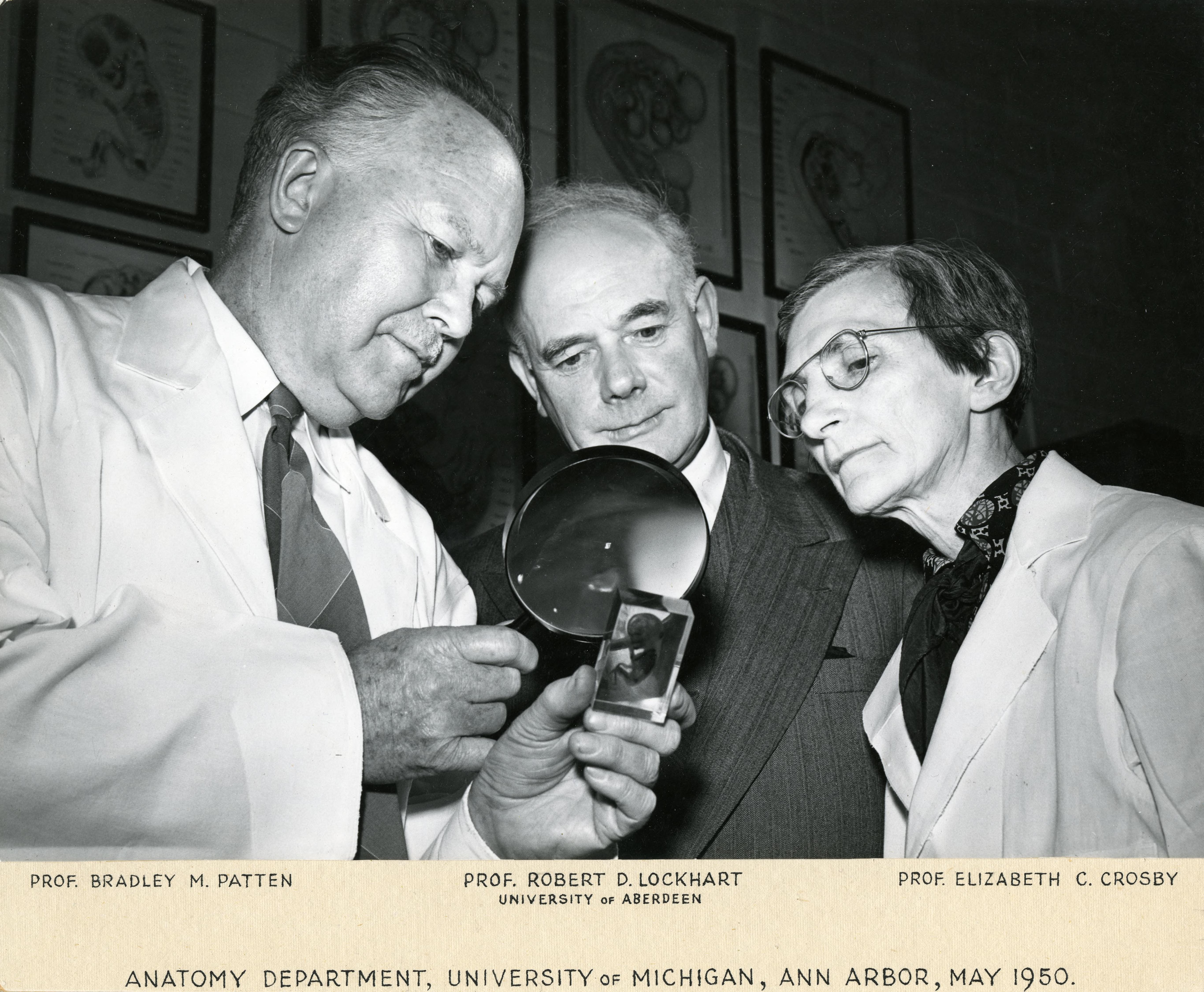 U M Library Image Collection Portfolios 100th Anniversary