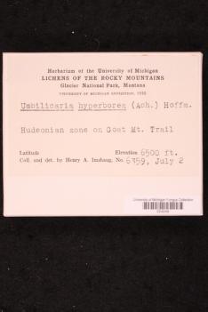 Umbilicaria hyperborea image