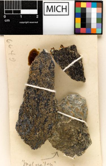 Miriquidica leucophaea image