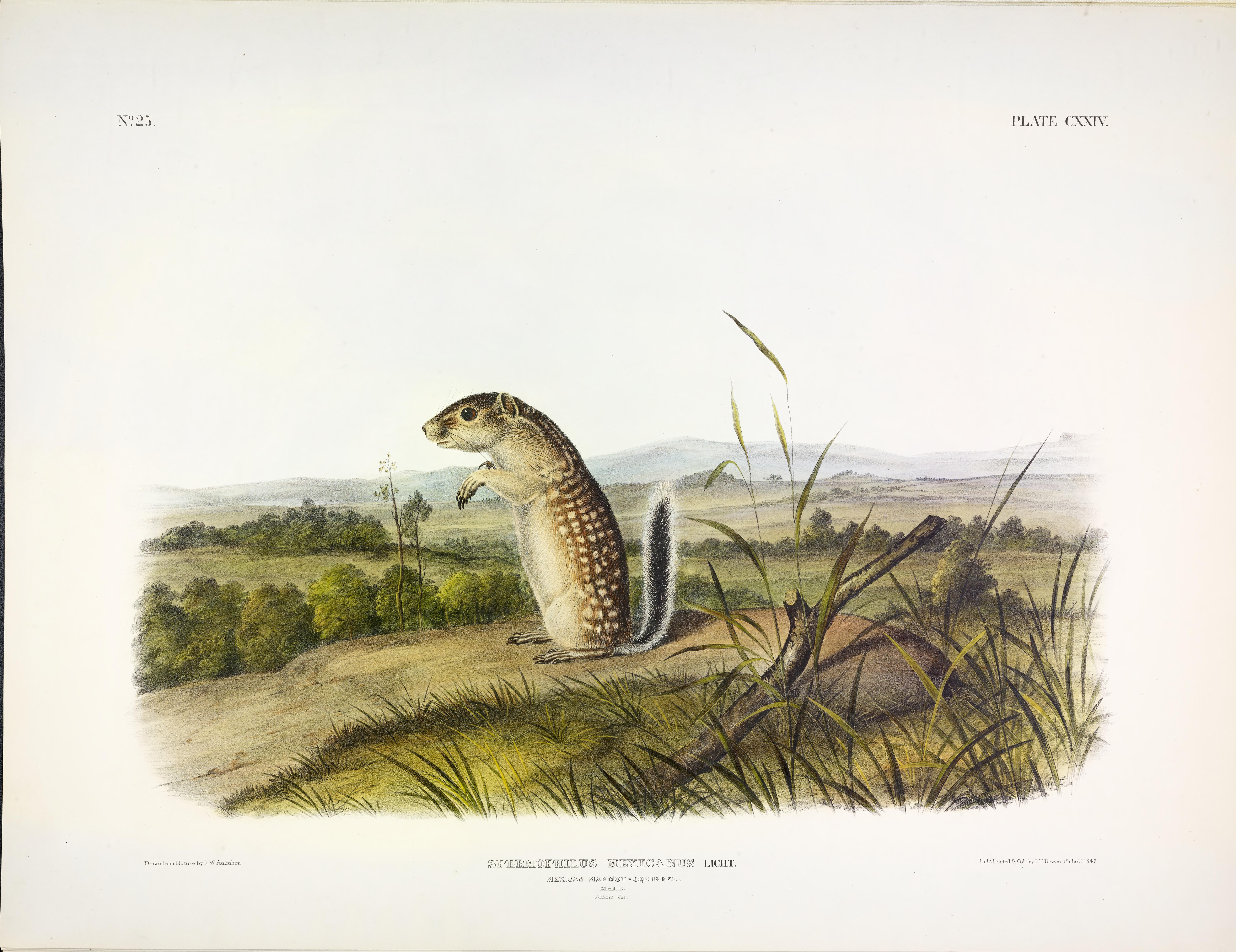 John James Audubon\'s Birds of America and Viviparous Quadrupeds ...