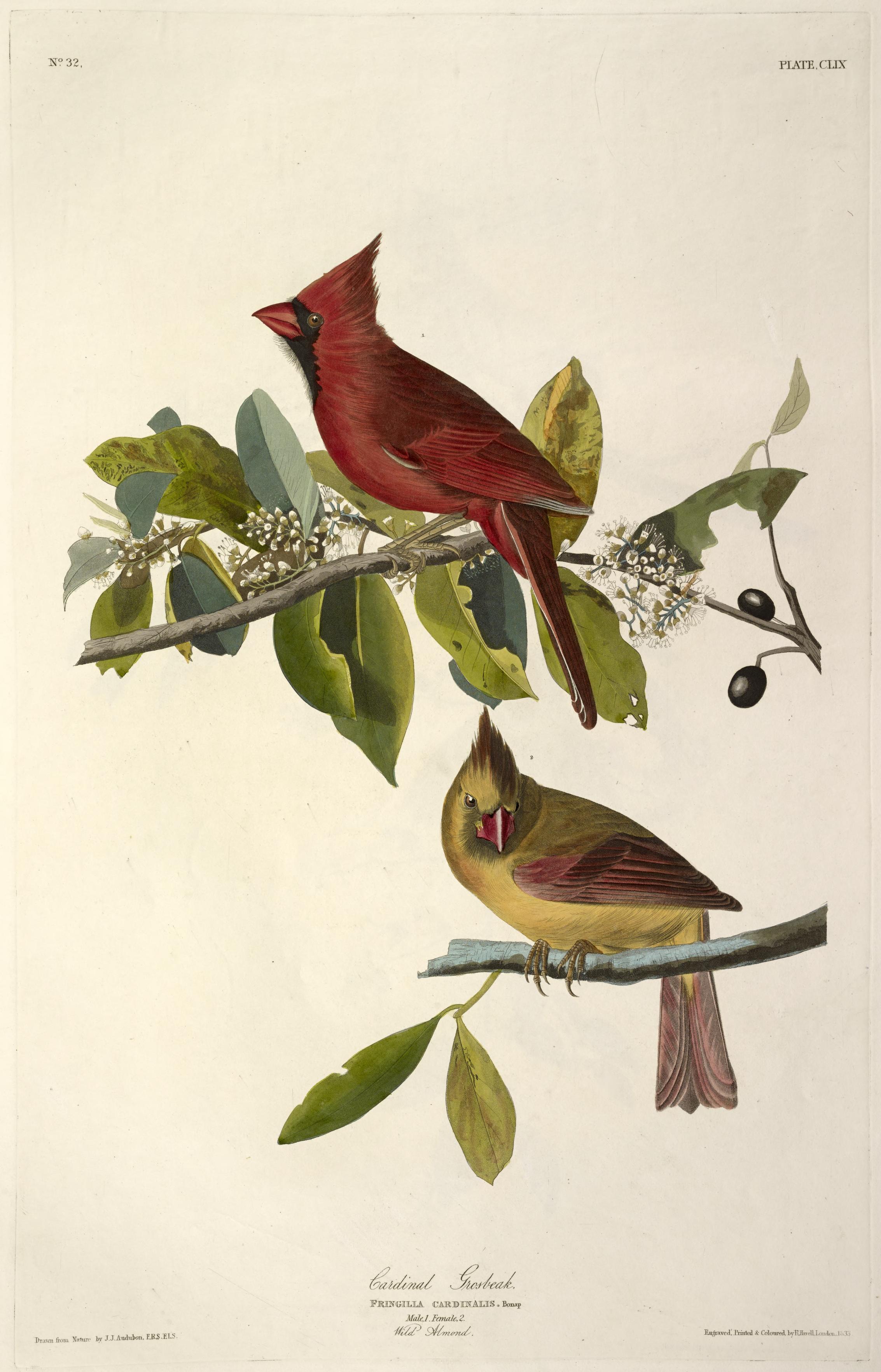 john james audubon u0027s birds of america and viviparous quadrupeds