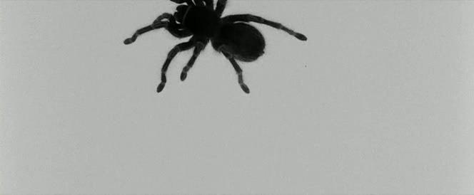 Figure 13. Tarantula in I'm Not There.