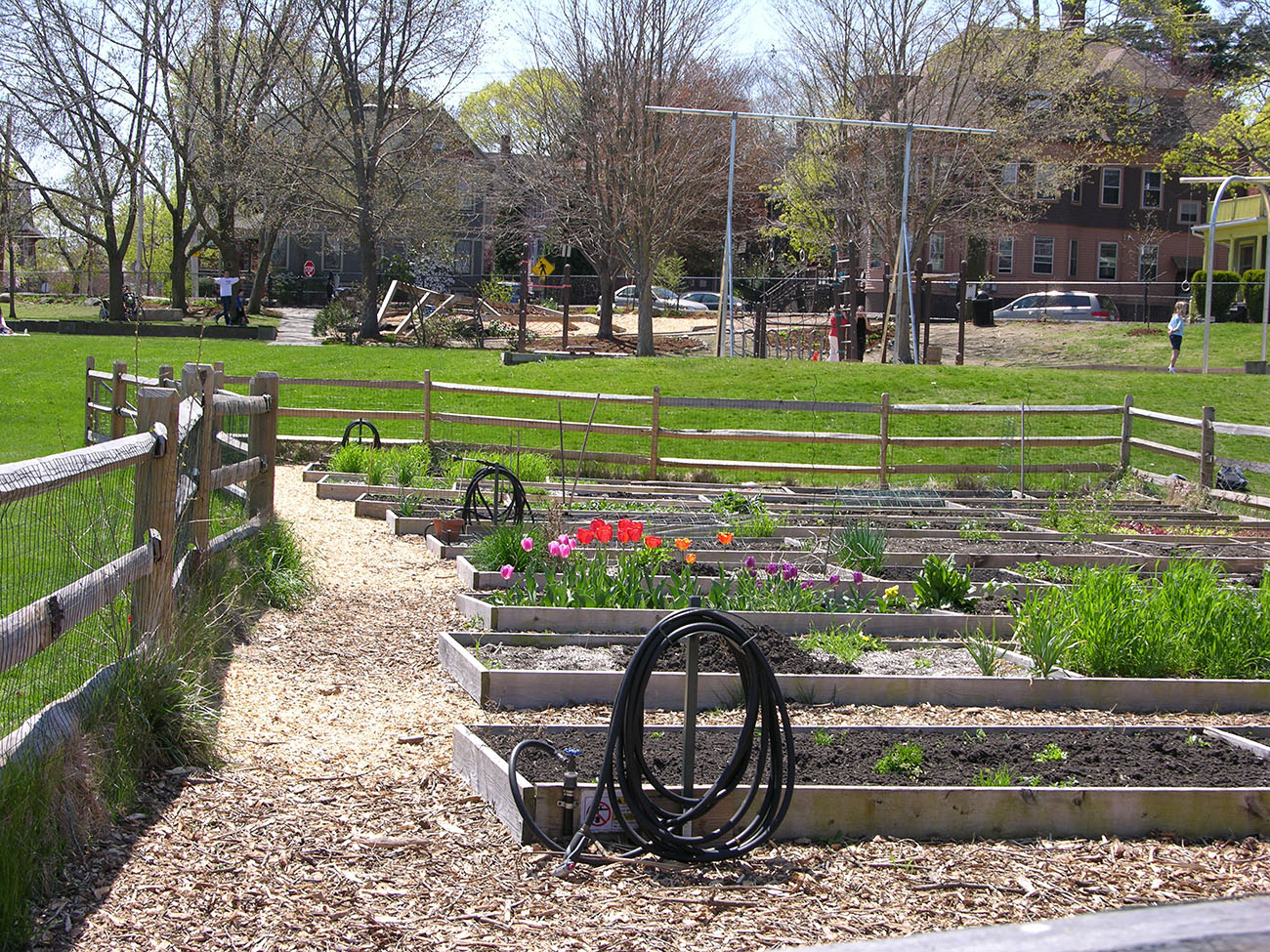 Figure 11.5. Community garden plots within a larger park area. (Photo by J. Buxton)
