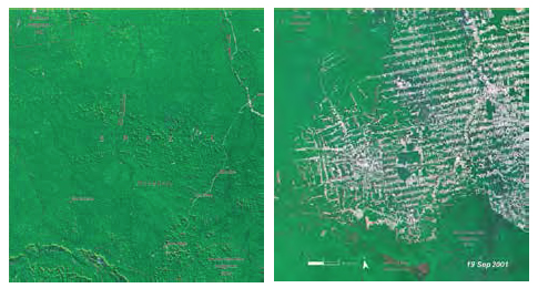"Fig. 19 Environmental violence: before (1975) and after (2001) satellite images showing patterns of deforestation at one of the ""development poles"" at southwestern Amazonia (image analysis by UNEP). Patterns of environmental degradation in Amazonia followed the blueprint elaborated by the militaries."