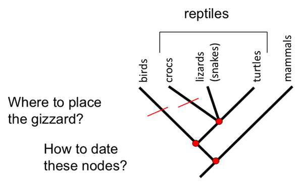 Phylogeny as population history figure 2 if we use an incorrect phylogeny for example one based on ccuart