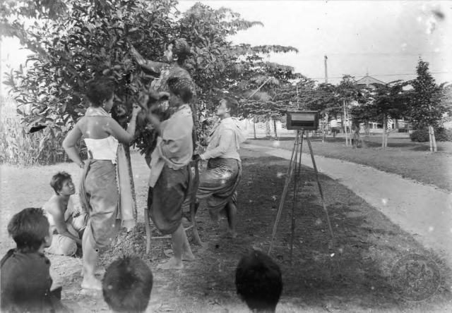 Figure 3. Bunnag sisters picking fruit from trees at Dusit.