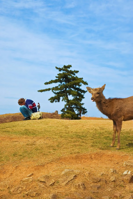 Yuko Tada, from the series Strolling in between: deer and people on Wakakusayama Hill (2007–2011).