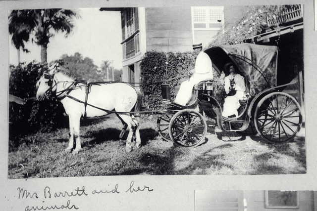 Mrs. Barrett and her pets inside a horse-drawn carriage, 1907-1916.