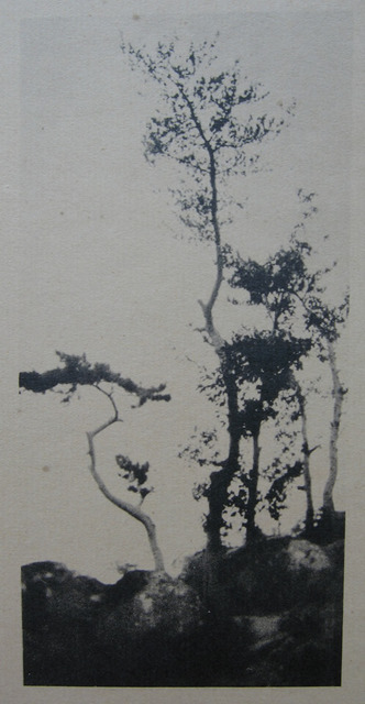 Fig. 5: Chen Wanli 陳萬里 (1892-1969), After Ni Yunlin's [Ni Zan]Small Landscape of Pines & Rocks (On the Path at Panshan to the East of Beijing) 仿倪雲林松石小景 (京東盤山道中), ca. 1919-1924. Gelatin silver print. From Chen Wanli, Da Feng ji (Great Wind Collection), Courtesy of Chen Shen.