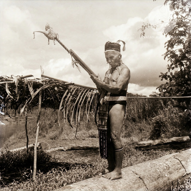 Figure 4: Datuk Moyang Jau playing the Kelunaye, Long Jegan, 1956. Photograph from the archive of the Sarawak Museum.