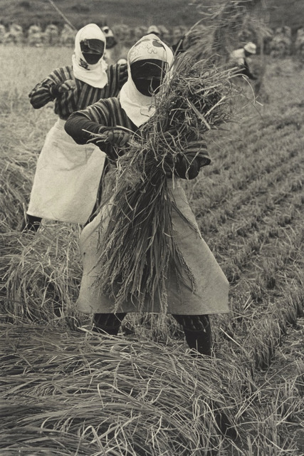 Fig. 3. Rice Harvesting, Yamagata Prefecture (1955), by Hiroshi Hamaya, gelatin silver print, © Keisuke Katano, The J. Paul Getty Museum, Los Angeles.
