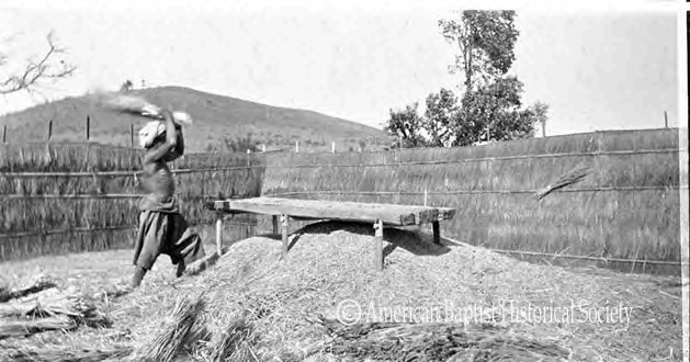 A Pa-Oh man threshing wheat by hand, at a threshing floor near Loikong, Federated Shan States [today's Shan State]. Note the pile of wheat and chaff under the threshing table, and the unthreshed bundles. March 4, 1927.