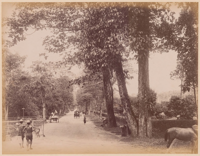 Fig. 10. Orchard Road, 1870s, G R Lambert & Co photograph from the Lee Kip Lin Collection. (All rights reserved, Lee Kip Lin and National Library Board, Singapore 2009)