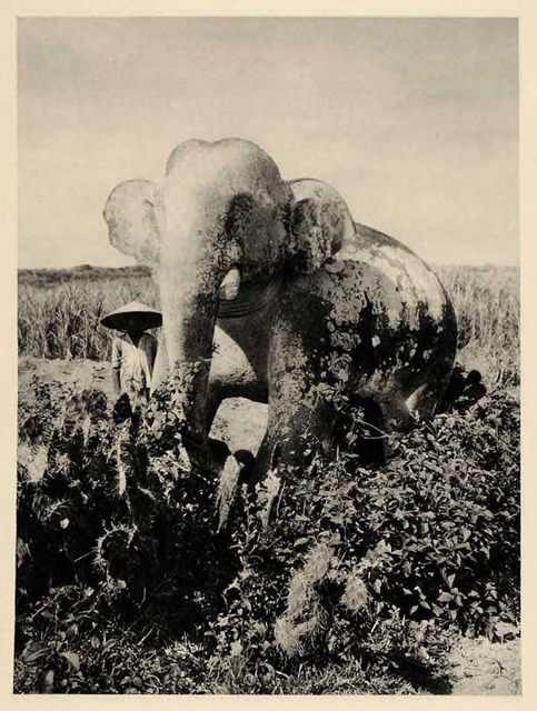 Fig. 24. Martin Hürlimann, Elephant Statue in the Ruins of the Fortress of Trà Bàn, (Annam Champa Cha Ban), 1926.