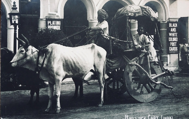 Fig. 12. Bullock Cart, India, published by K. Lall & Co., Agra Cantonment. From the private collection of Dr Emily Stevenson.