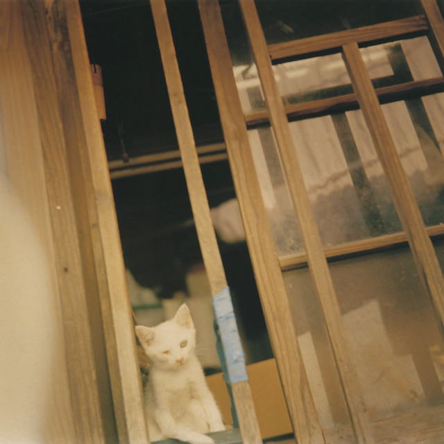 Fig. 2. Hara, Mikiko, Untitled, from the Is As It series, 1996, Image 1 from the book Hysteric Thirteen, 2005, © Mikiko Hara, courtesy of Osiris, Tokyo.