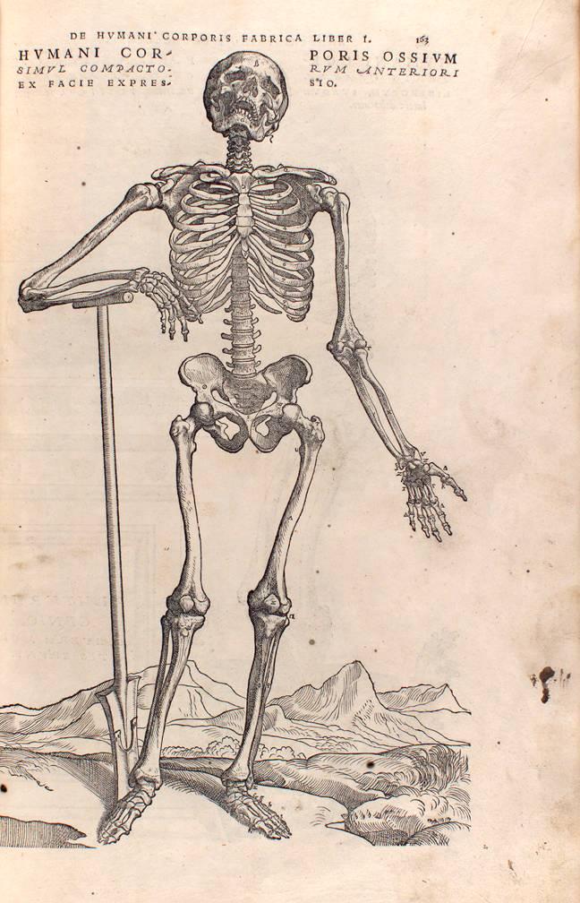 Images From Andreas Vesalius De Humani Corporis Fabrica 1543