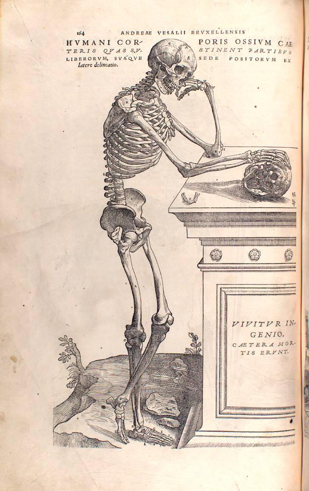 Rudolf Virchows Sammlung pathologischer Schädel am Berliner ...