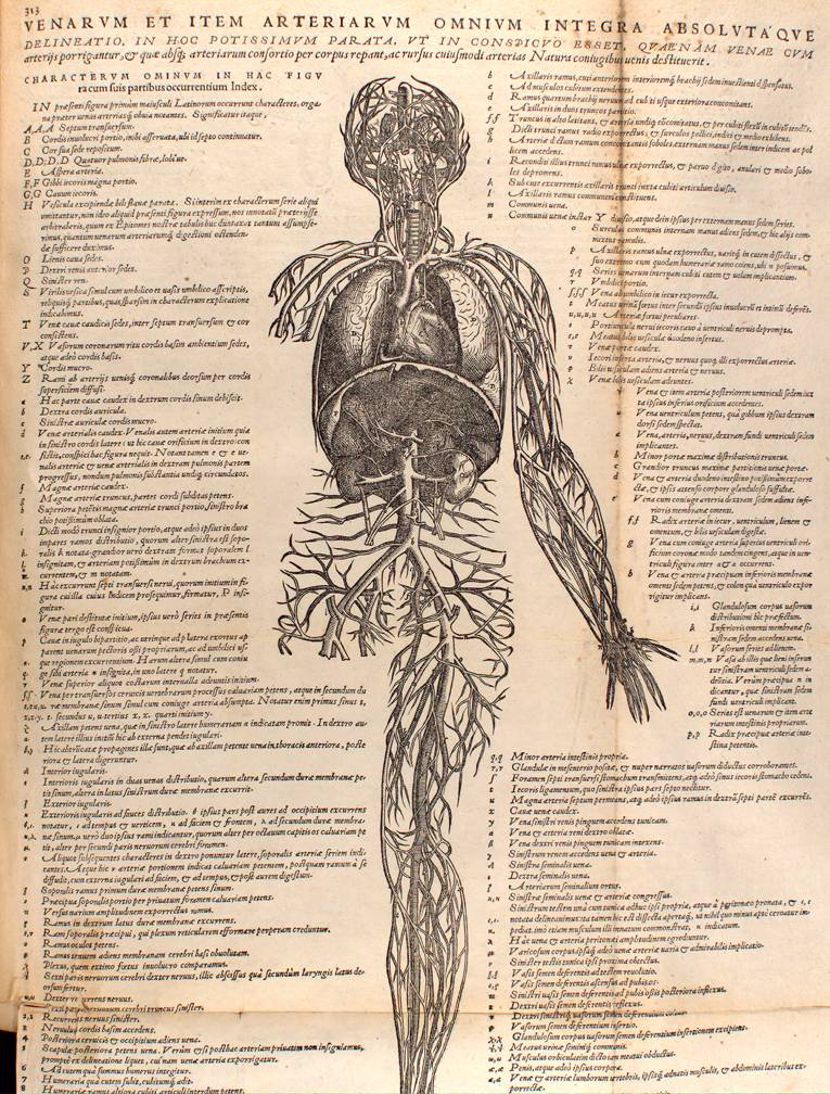 Images from Andreas Vesalius