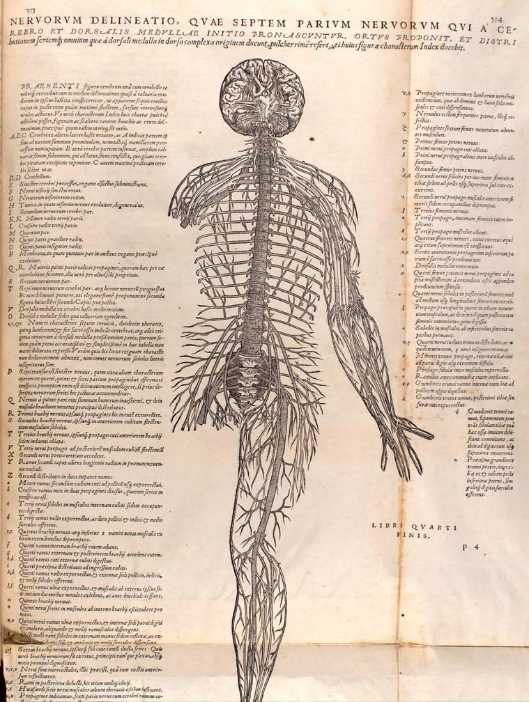 Images from Andreas Vesalius\' De Humani Corporis Fabrica, 1543
